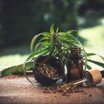 La résine de CBD: Quels sont les modes de consommation de ce dérivé de cannabis?